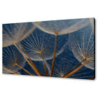 BEAUTIFUL DANDELION SEEDS CLOSE UP MODERN DESIGN CANVAS PRINT WALL ART PICTURE