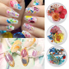 Dried Flower Leaf Colorful 3D Nail Art Natural Floral Nail Decoration Stickers