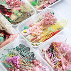 1box real dried flowers pressed for art craft resin pendant jewellery making diy