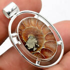 Fossil Ammonite - Madagascar 925 Sterling Silver Pendant Jewelry SDP62524