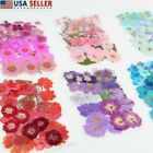 36-40x Real Pressed Dried Flowers Floral For Diy Epoxy Resin Candle Arts Crafts