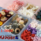 1-3 Box Real Pressed Dried Flowers For Art Craft Resin Pendant Jewellery Diy Au