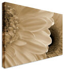 White Borwn Gerbera Floral Flower Canvas Picture - Large+ Any Size