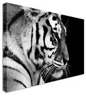 Large Animal Thinking Tiger B&W Canvas Wall Art Pictures