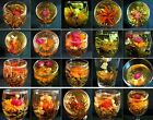 Tea Process Mixed types bud Blooming flower Jasmine new beauty cake herbal