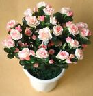 Lifelike Large Rhododendron artificial silk artificial flowers and plants