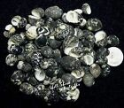"CRAFT SHELLS - Black & White Nerita Peloronta 3/8""-5/8"" Seashells - FREE ship!"