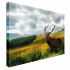 Scottish Stag on Highlands Canvas Art Cheap Wall Print Any Size
