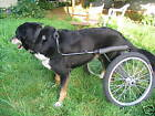 Dwanecart Dog Wheelchair - for medium to large dogs