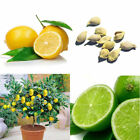 2015 10Pcs Rare Lemon Tree Indoor Outdoor Available Heirloom Fruit Seeds Perfect