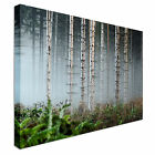 Misty forest Canvas Prints, Affordable Wall Art - Great Value
