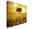 Tree In Sunflower Field Colour Canvas art, Great Value sq