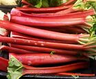 25 - 200 seeds Rhubarb VICTORIA Heirloom tastes great fresh or Pie Jam sauce