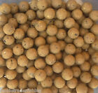 STICKY BAITS MANILLA SHELF LIFE BOILIES TASTER PACKS in 12mm