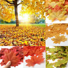 Nice 100pcs Fall Silk Leaves Wedding Favor Autumn Maple Leaf Decorations