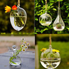 Hanging Glass Ball Vase Flower Plant Pot Terrarium Container Decor GO Lot