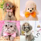 5X Dog Cat Puppy Bow Tie Collar Pet Necktie Grooming Suit  Many Colors You Pick