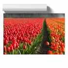 Poster Print Wall Art Home Décor Red Tulip Field Flowers Floral Botanical