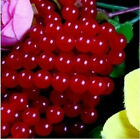 """4mm-10mm Natural Rare Red Ruby Round Loose Beads Gemstone 15"""""""