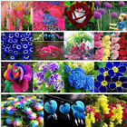 Various Hydrangea Orchid Ideal Garden Potted Seeds Flower Plant Ornamental MP
