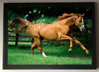 Running Horse A4 Picture Clock