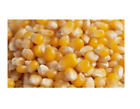 WHOLE MAIZE KERNELS –ANIMAL FEED – CHICKENS, WATERFOWL – SAMPLE TO 20kg
