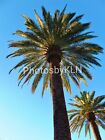 Palm Trees Photo Photograph Greeting Card Las Vegas