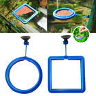 Aquarium Suspension Food Feeding Ring Feeder Floating Feeding Ring Square Type