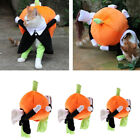 Dog Pumpkin Halloween Costumes - Realistic & Funny Pumpkin for Dogs & Cats