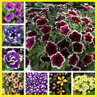 100Pcs Colorful Petunia Hybrid Flower Seeds Home Garden Multi-Color Mix NEW MORE