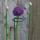 Plant Stem Support Ring Cage Garden Iron Plant Border Support Wire Hoop 2019