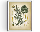 Wormwood Botanical Print Absinthe Herb Decor Vintage Art Picture Poster Gift