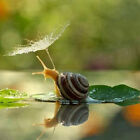 Drill Diamond Painting Kit Like Cross Stitch Snail on the Pool Lotus Leaf ZG005F $16.81 USD on eBay