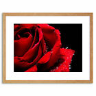 Photo Nature Plant Flower Rose Red Romantic Home Framed Print 9x7 Inch