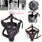 1x No Pull Dog Puppy Harness Bust Pad Pet Training M/L Vest with Pitbull Leather
