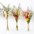 Natural Dried Bouquets  Gypsophila Real Flower Plant Stems Colorful Home Decor~