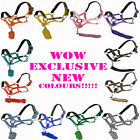 NEW PADDED EQUESTRIAN HORSE RIDING COB PONY HEADCOLLAR LEADROPE HALTER ALL SIZES