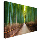Bamboo Forest in Japan Canvas Art Cheap Wall Print Large Any Size