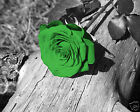 Green Wall Art / Rose Flower Home Decor Matted Picture  (Options)