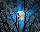 Tree Moon Wall Art/Blue/Bedroom Home Decor Matted Picture
