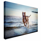 Pitbull Dog Running Beach Canvas wall Art prints high quality great value