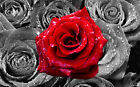Floral Red Rose on Bed of Roses Abstract  CANVAS WALL ART Picture Print