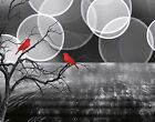 Black White Red Birds On Tree Branch Home Wall Art Decor Matted Picture