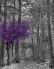 Black White Purple Tree Forest Path Home Decor Wall Art Matted Picture