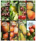 1 HARDY FRUIT TREE 4 - 5FT GARDENING PLANT Apple Cherry Plum Pear Peach Apricot
