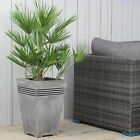 Buy Palm Tree XL Chamaerops Humilis Including FREE Choice of Planter Worth £19.9