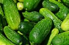 Spacemaster, Slicing Cucumber Seeds, NON-GMO, Variety Sizes, FREE SHIPPING