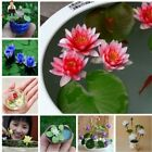 20pcs/Bag  MIX Lotus Flower Lotus Seeds Hydroponic Aquatic Plants Bowl