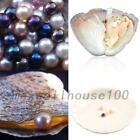 5/10PCS 7.5-8MM Individually Akoya Oysters with Cultured Pearls Birthday Gift