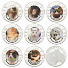 WR Famous Lovely Cat Silver Coins Collection Mint Rare Souvenir Gifts